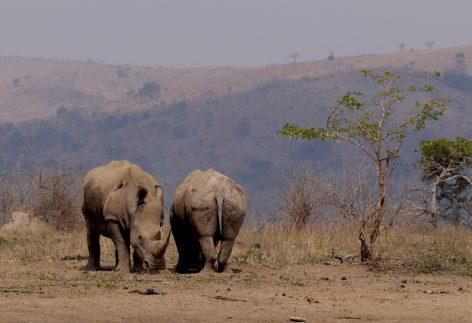 Rhino Hluhluwe–iMfolozi