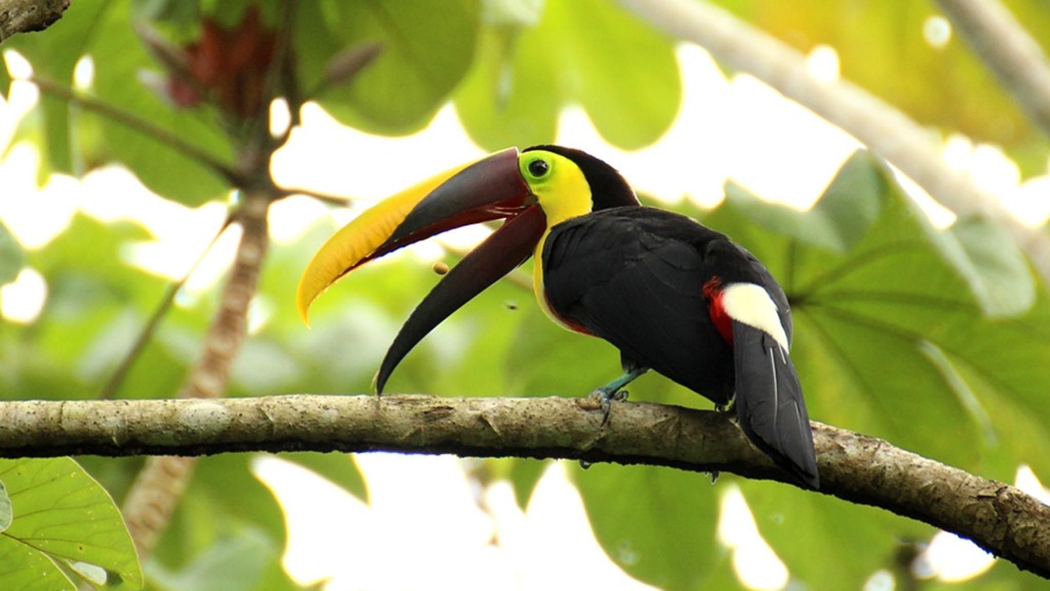 latin american holiday wildlife